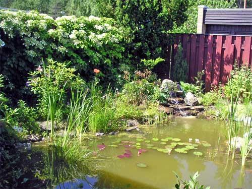 Trädgård trädgård damm : Min trädgÃ¥rdsdamm 2005